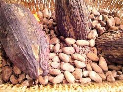Kakao © Flickr/ dizznbonn