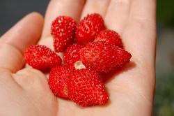 Erdbeeren © Flickr/ iLoveButter