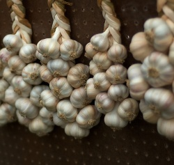 knoblauch-by-flickr-carbonnyc